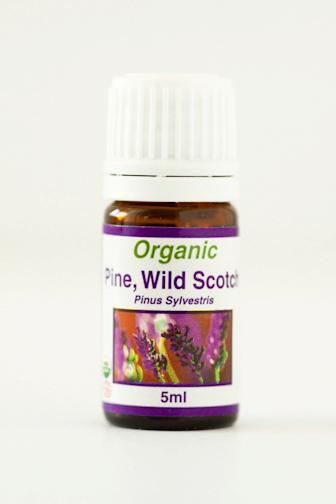 pine_wild_scotch.png
