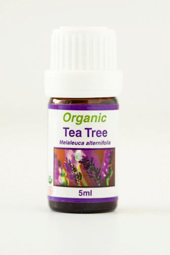 tea_tree.png